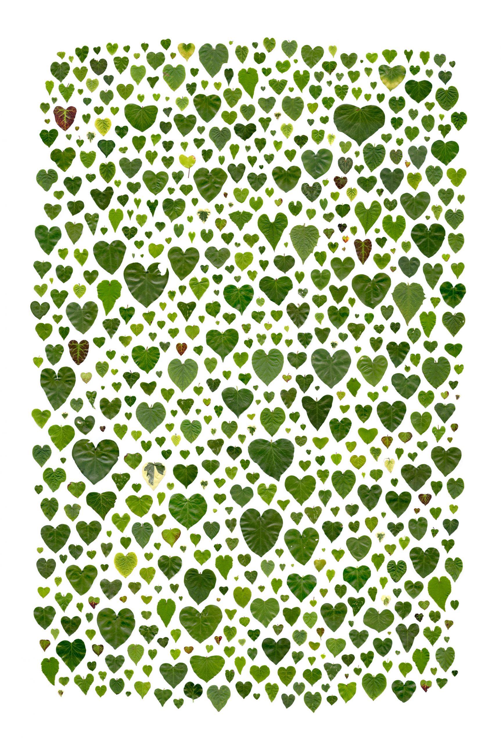 Anne-Geene_O-Amor_Caroline-O_Breen
